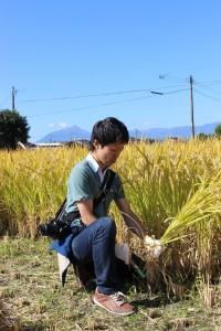 文句も言わず、姿勢よく稲を刈るわたし