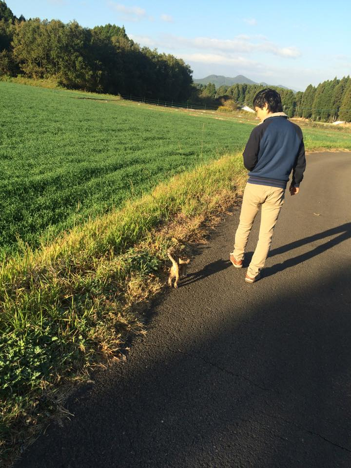 朝の猫ちゃんとのお散歩。トコトコとどこまでもついてきます。