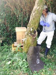 日本蜜蜂について教えてくれながら巣箱の様子を確認する先輩隊員