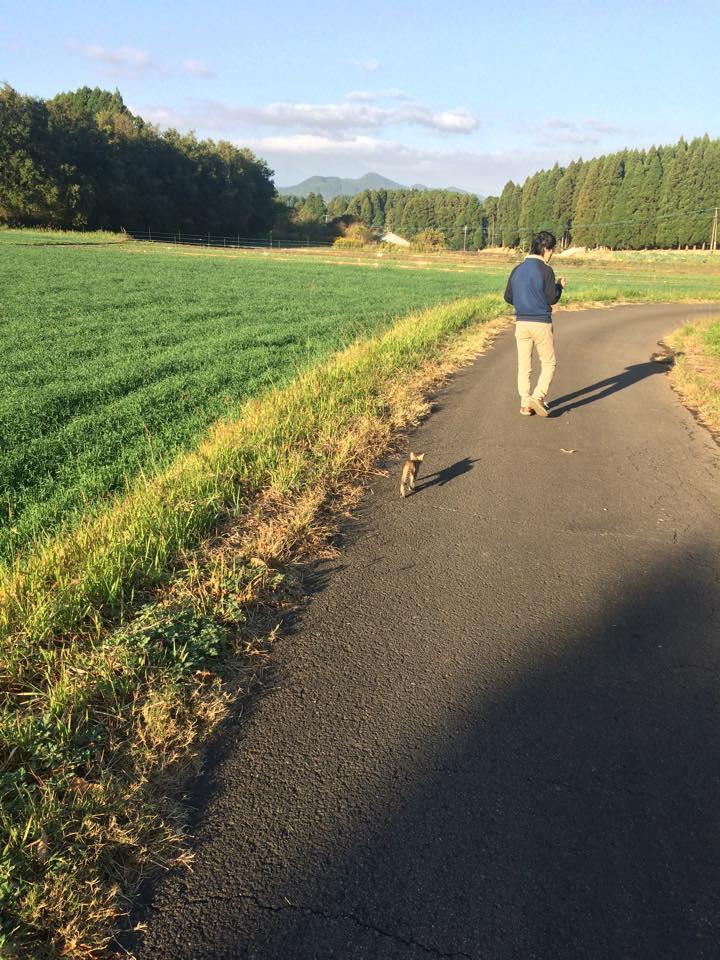 畑の道をお散歩