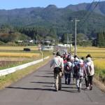 黄金色の田んぼ道を山をバックにウォーキング