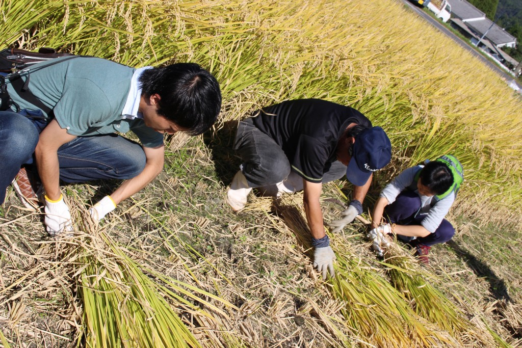 稲刈り体験では農家さんたちが丁寧に基本から教えてくれました