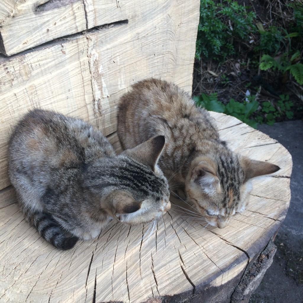家に帰ると、見知らぬ子猫たちが丸太の椅子に座っていました。