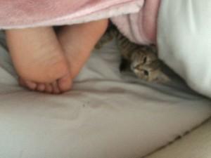 寝起きのチョロ