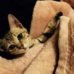 ふわふわ毛布がお気に入り