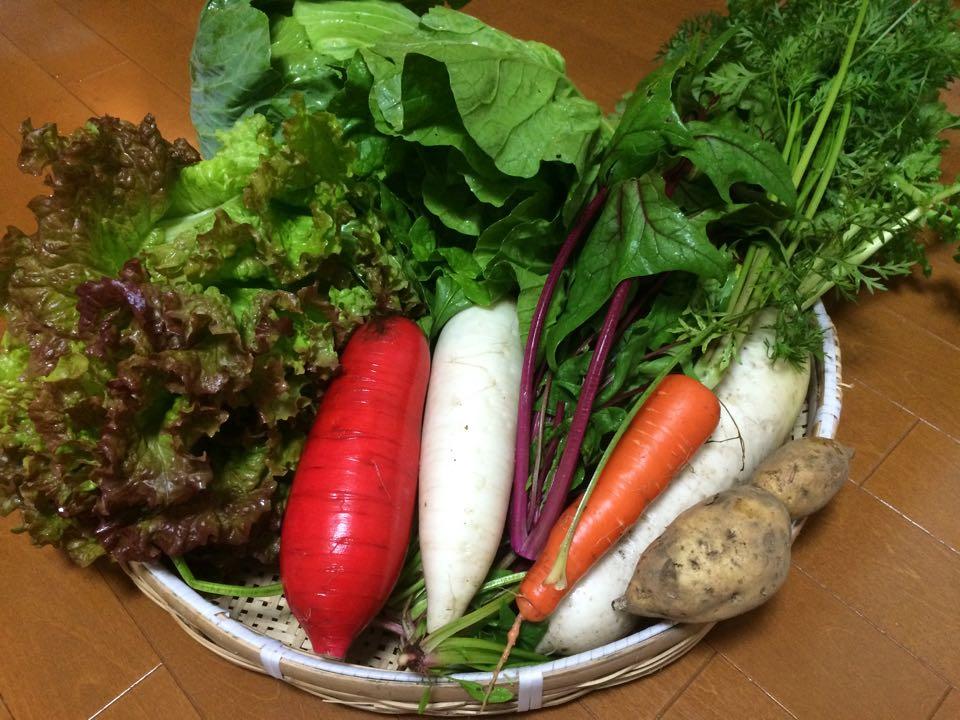 取材するとたくさんの野菜もいただきました・・・!