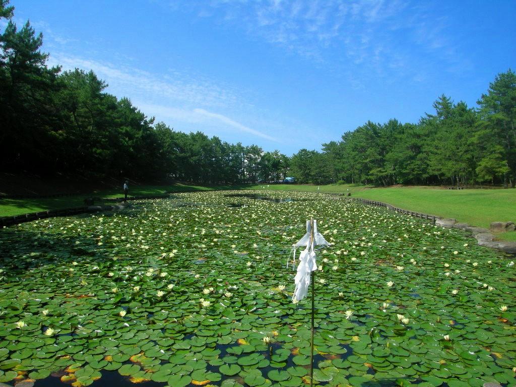 宮崎市・市民の森の「みそぎが池」の睡蓮http://blogs.yahoo.co.jp