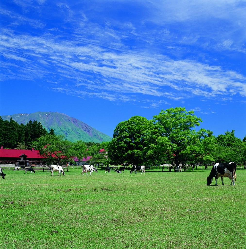 岩手の小岩井農場。出展:http://www.walkerplus.com/spot/ar0203s07600/