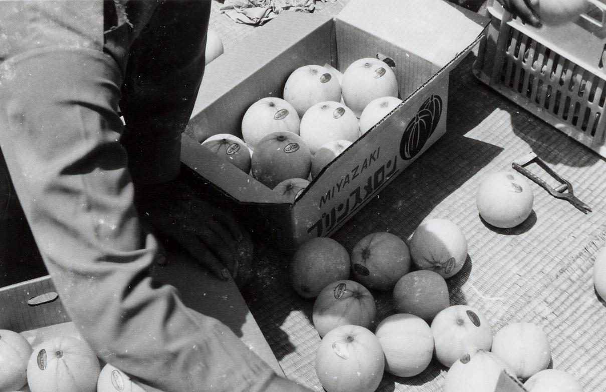 野尻町プリンスメロン収穫